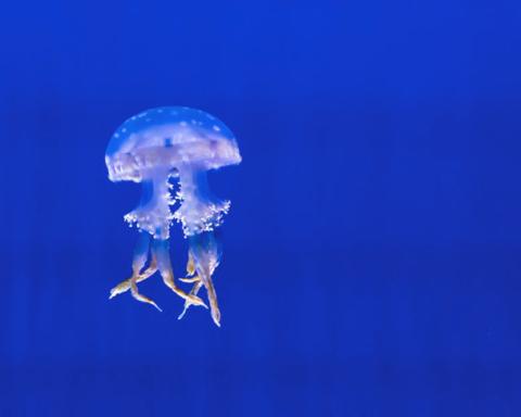Outre les poissons, les visiteurs pourront également admirer la beauté des méduses (photo : pexels.com)