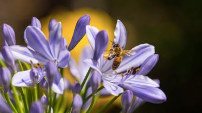 L'espace vital des abeilles disparaît progressivement à cause de l'urbanisation (photo : Pexels.com)