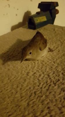 Invité surprise d'Allemagne : cet oiseau migrateur était en route pour l'Afrique (photo : KHC).