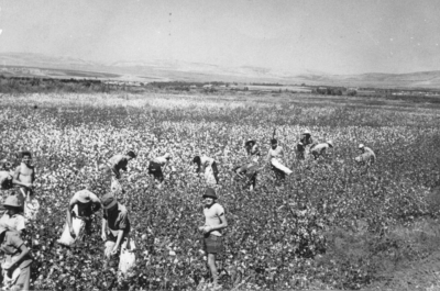 Kibboutzniks dans des champs de coton (kibboutz Shamir, vers 1958) (photo : archives Shalir via le PikiWiki - Israel free image collection project).