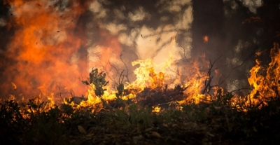 Israël veut aider le Brésil à lutter contre les feux ravageant la forêt amazonienne (photo : Pixabay).