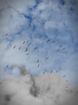 iseaux dans le ciel d'Israël (photo : Na'hum Ciobotaru).