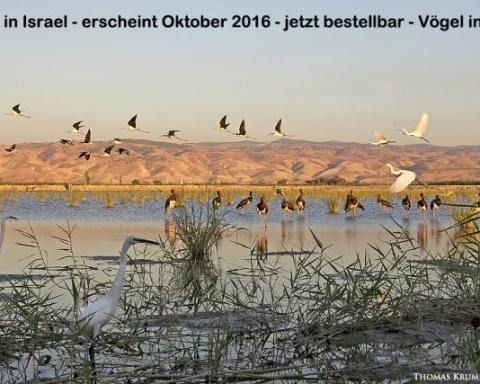 Le photographe Thomas Krumenacker montre, sur 180 pages, la beauté et la biodiversité d'Israël