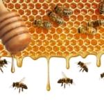 Ce collage, qui montre l'intérieur d'une ruche, est l'oeuvre d'Uschi Weiersmüller. Cette remarquable photographe suisse est également une créatrice graphique de talent et une apicultrice engagée.