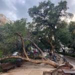 Arbre déraciné par la tempête sur le boulevard Ben Gourion à Tel-Aviv (photo : KHC).