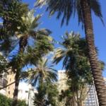 Allée à Tel Aviv – Les arbres en Israël ne sont pas aussi bien protégés q'ils devraient l'être. (photo: KHC)