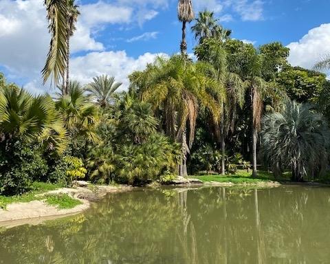Israël regorge de beaux paysages comme le jardin tropical au nord de Tel-Aviv (photo : KHC)